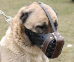 Agitation/Police Dog Muzzle For Anatolian Shepherd-Leather Muzzle