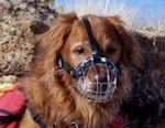 Golden Retriever dog muzzles Muzzle - Wire Muzzle,Cage Muzzle,Basket Dog Muzzle For Golden Retriever dog muzzles
