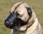 Leather Dog Muzzle for Anatolian Shepherd-Not Latigo Muzzle