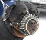 Royal Spiked Leather Dog Muzzle
