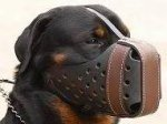 Agitation/Police Dog Muzzle For Rottweiler-Leather Muzzle