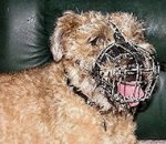 Border Terrier Muzzle - Wire Muzzle,Cage Muzzle,Basket Dog Muzzle For Border Terrier