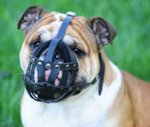 Leather Basket Dog Muzzle for British Bulldog