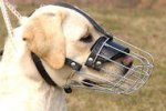 Labrador Retriever Muzzle - Wire Muzzle,Cage Muzzle,Basket Dog Muzzle For Labrador Retriever