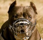 PitBull Muzzle - Wire Muzzle,Cage Muzzle,Basket Dog Muzzle For PitBull