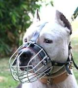 Staffordshire Terrier Muzzle - Wire Muzzle,Cage Muzzle,Basket Dog Muzzle For Staffordshire Terrier