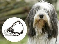 bearded-collie-muzzles