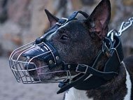 english-bullterrier-muzzles