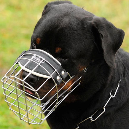 Can Dogs Drink Water With A Muzzle On
