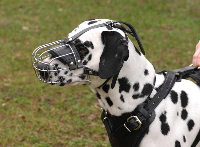Dalmatian Wire Muzzle-Cage Basket Dog Muzzle