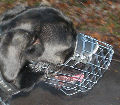 Mastiff Dog Muzzle - Wire Muzzle,Cage Muzzle,Basket Dog Muzzle For Mastiff Dog