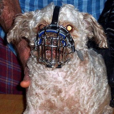 Pekepoo dog Wire Muzzle-Cage Basket Dog Muzzle