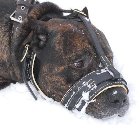 Cane corso Royal Nappa Leather Dog Muzzle