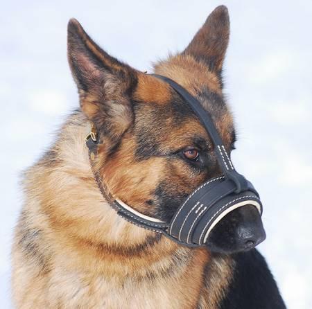 Amazing Nappa Padded Leather Dog Muzzle