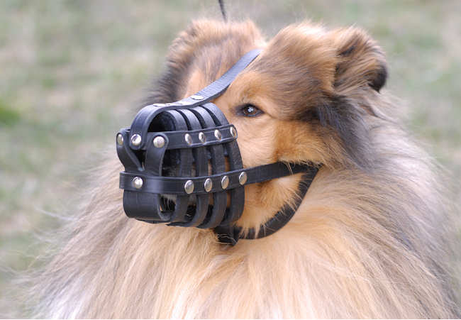 Leather Basket Dog Muzzle for Collie