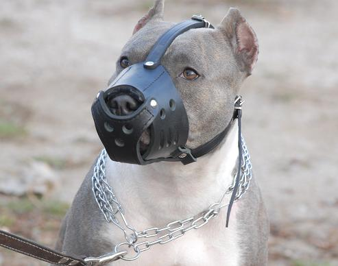 Everyday Pit bull Leather dog muzzle-american pitbull terrier