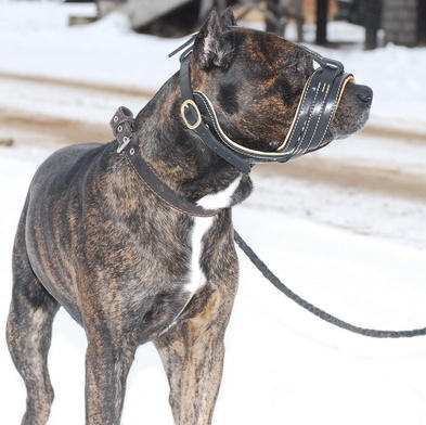 leather dog muzzle fit cane corso