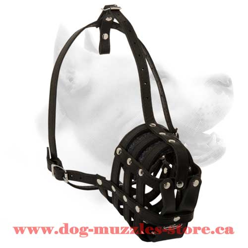 Gorgeous Leather  Basket Dog Muzzle