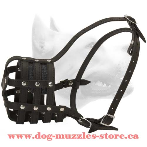 Amazing Leather  Basket Dog Muzzle