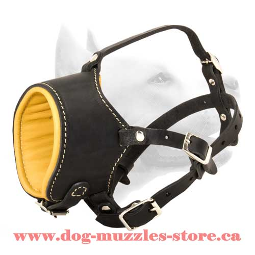 Strict Leather Dog Muzzle