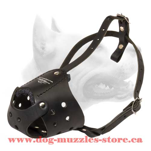 Leather Dog Muzzle For Active Dogs