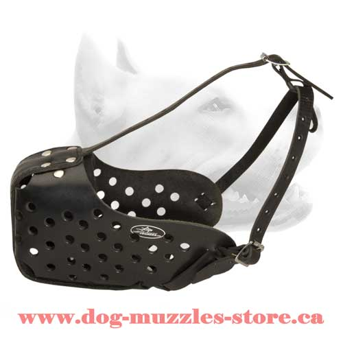 Finely Crafted Leather Dog Muzzle