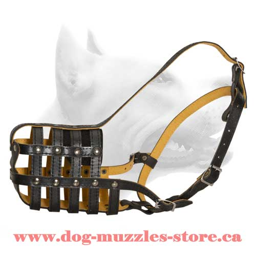 Excellent Nappa Padded Leather Dog Muzzle