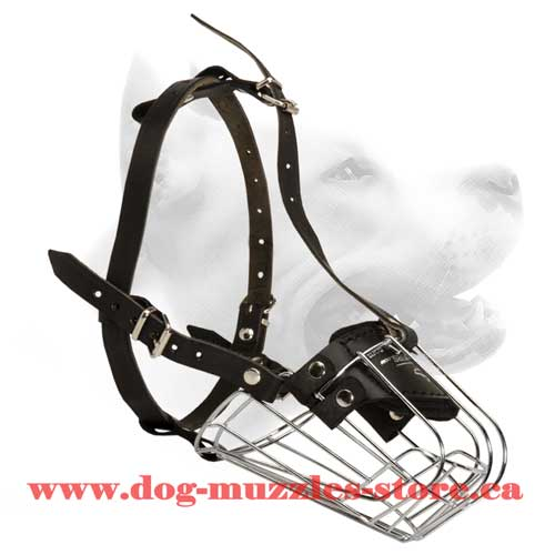 Unordinary Wire Cage Dog Muzzle