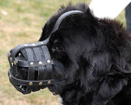 Leather Basket Dog Muzzle for Newfoundland