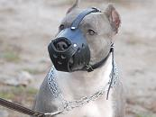 Leather Dog Muzzle for PitBull-Not Latigo Muzzle