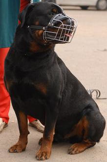 Rottweiler muzzle for large breeds