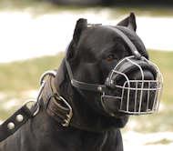 Cane Corso dog muzzle
